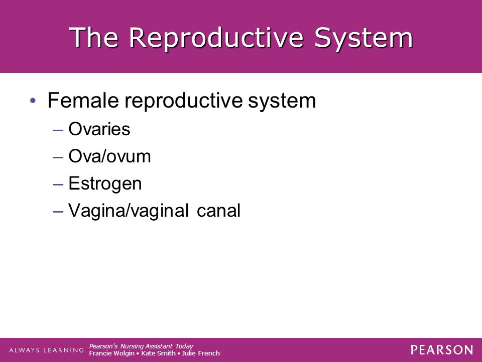 Pearson s Nursing Assistant Today Francie Wolgin Kate Smith Julie French The Reproductive System Female reproductive system –Ovaries –Ova/ovum –Estrogen –Vagina/vaginal canal