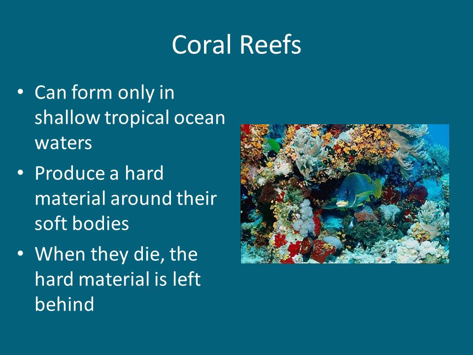 Grow in cold neritic waters where the ocean has a rocky floor Kelp Forests