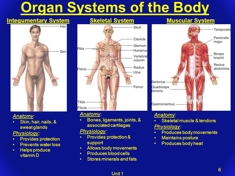 oranism physiology paper Why we study model organisms to understand the human body, presented by science and modencode.