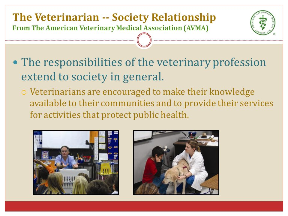 an analysis of the veterinary profession