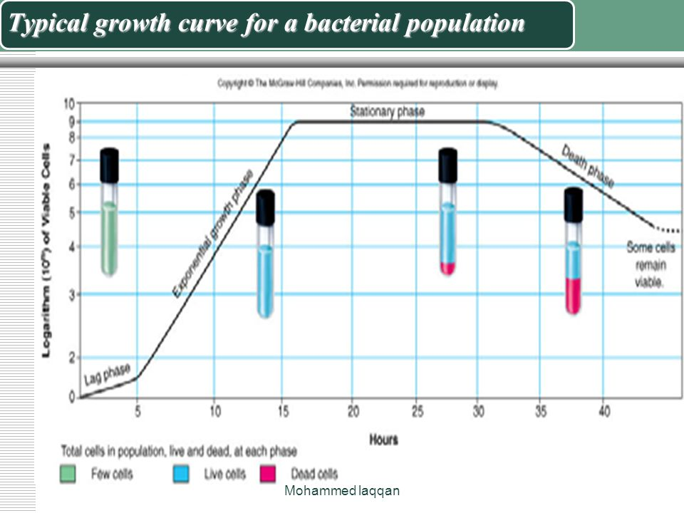 effects of population growth on environment Population growth will only make american public and political leaders about the detrimental effects of overpopulation on our environment effects of.