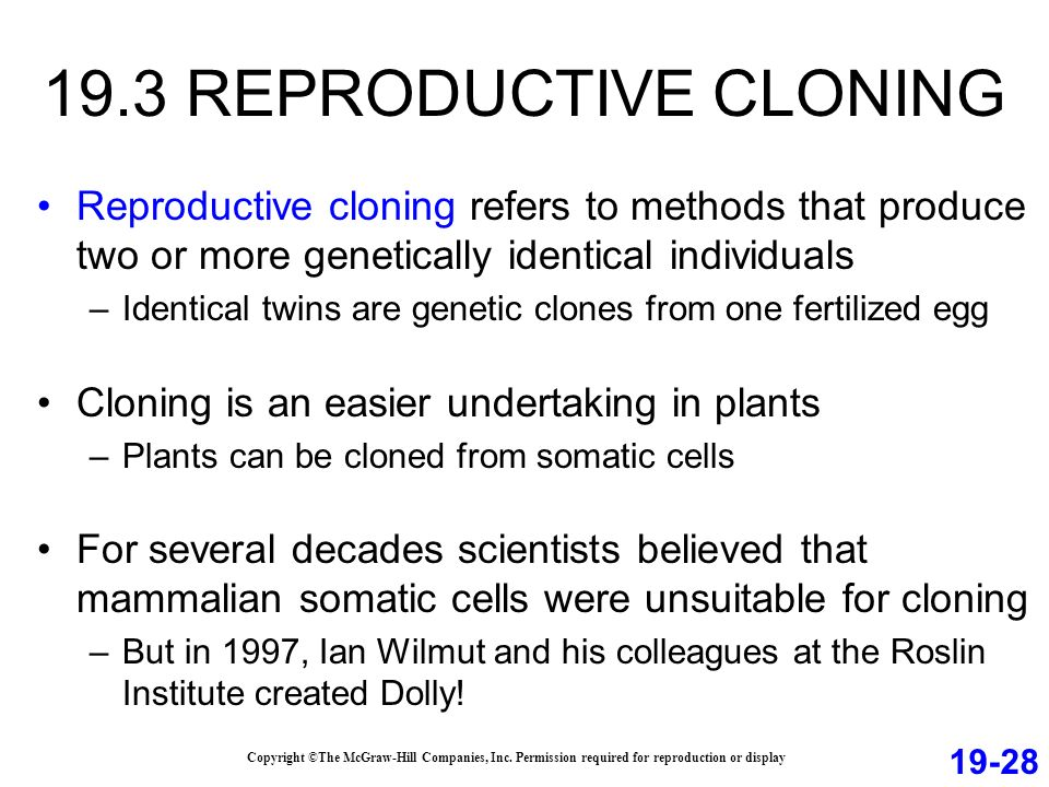 19.3 REPRODUCTIVE CLONING Reproductive cloning refers to methods that produce two or more genetically identical individuals –Identical twins are genetic clones from one fertilized egg Cloning is an easier undertaking in plants –Plants can be cloned from somatic cells For several decades scientists believed that mammalian somatic cells were unsuitable for cloning –But in 1997, Ian Wilmut and his colleagues at the Roslin Institute created Dolly.