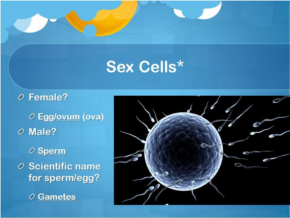 Scientific name for sex cells
