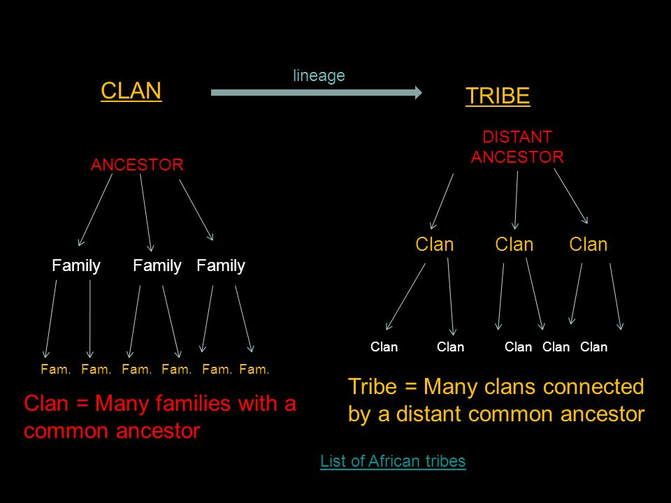 How can you find information about the languages of different tribes?