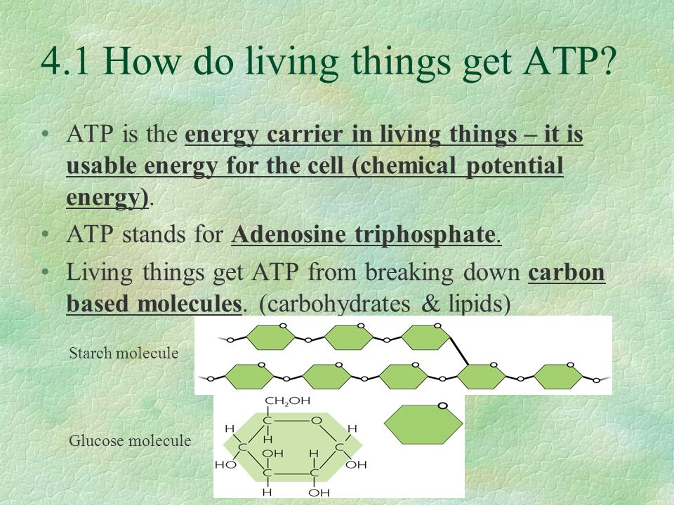 Photosynthesis 41 how do living things get atp atp is the energy photosynthesis 2 41 ccuart Gallery