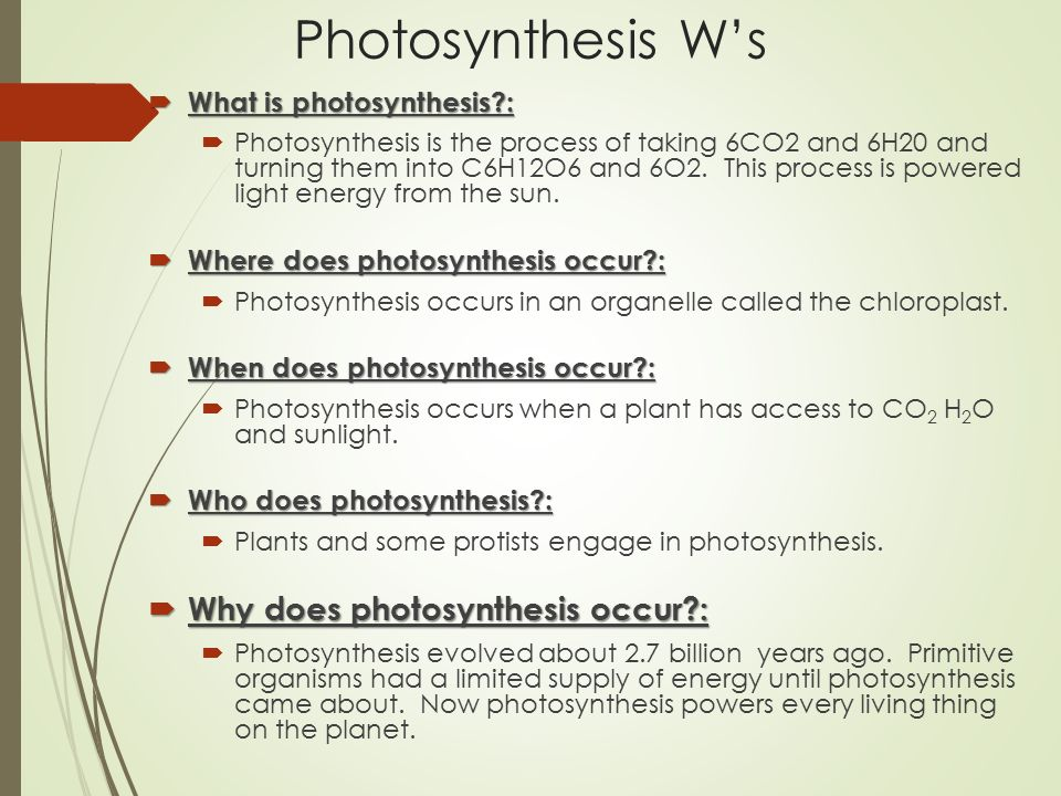 understanding the process of photosynthesis