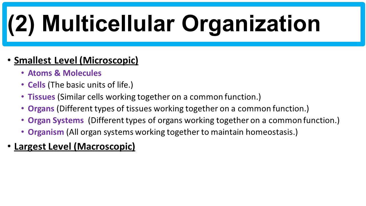 4 things cells do to maintain homeostasis - Smallest Level Microscopic Atoms Molecules Cells The Basic Units Of Life Tissues Similar Cells Working Together On A Common Function