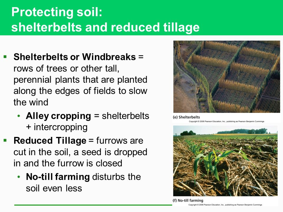 Protecting soil: shelterbelts and reduced tillage  Shelterbelts or Windbreaks = rows of trees or other tall, perennial plants that are planted along the edges of fields to slow the wind Alley cropping = shelterbelts + intercropping  Reduced Tillage = furrows are cut in the soil, a seed is dropped in and the furrow is closed No-till farming disturbs the soil even less