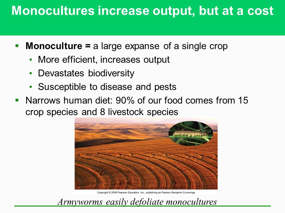 Monocultures increase output, but at a cost  Monoculture = a large expanse of a single crop More efficient, increases output Devastates biodiversity Susceptible to disease and pests  Narrows human diet: 90% of our food comes from 15 crop species and 8 livestock species Armyworms easily defoliate monocultures