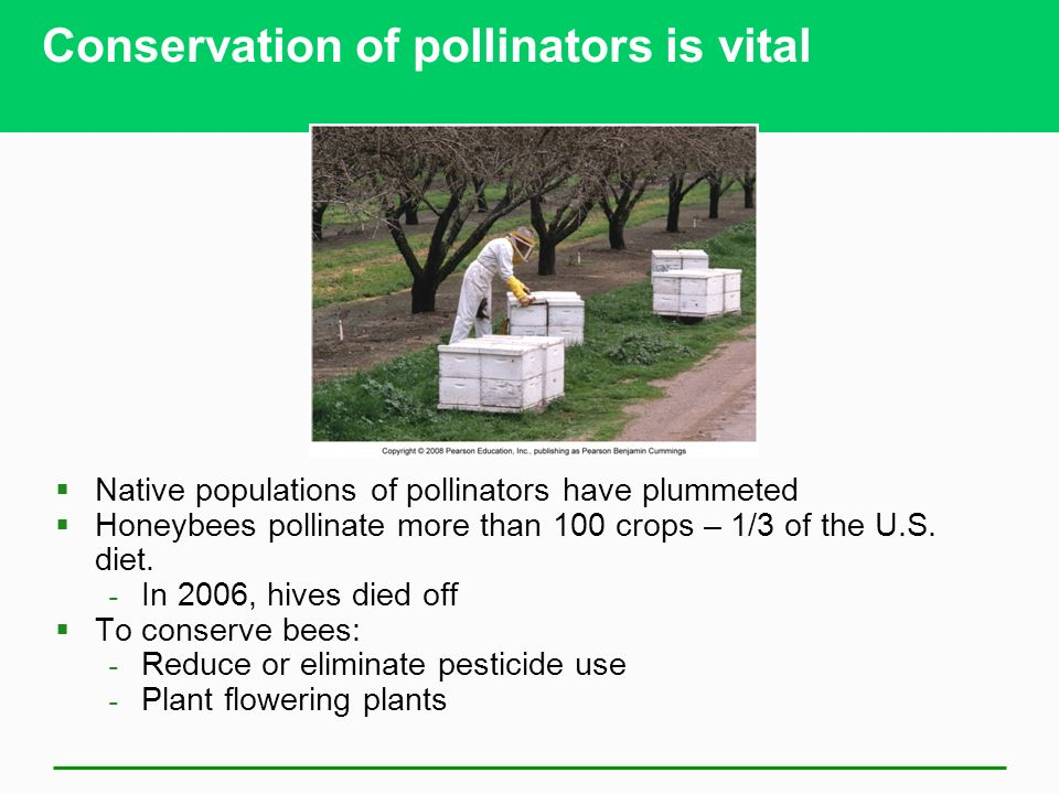 Conservation of pollinators is vital  Native populations of pollinators have plummeted  Honeybees pollinate more than 100 crops – 1/3 of the U.S.