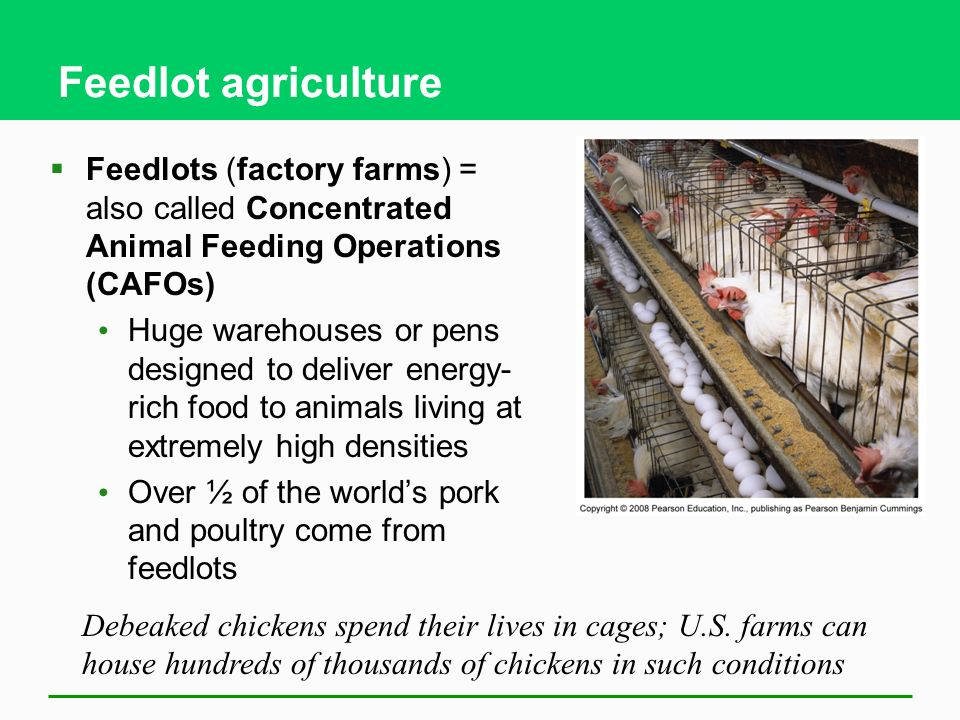 Feedlot agriculture  Feedlots (factory farms) = also called Concentrated Animal Feeding Operations (CAFOs) Huge warehouses or pens designed to deliver energy- rich food to animals living at extremely high densities Over ½ of the world's pork and poultry come from feedlots Debeaked chickens spend their lives in cages; U.S.