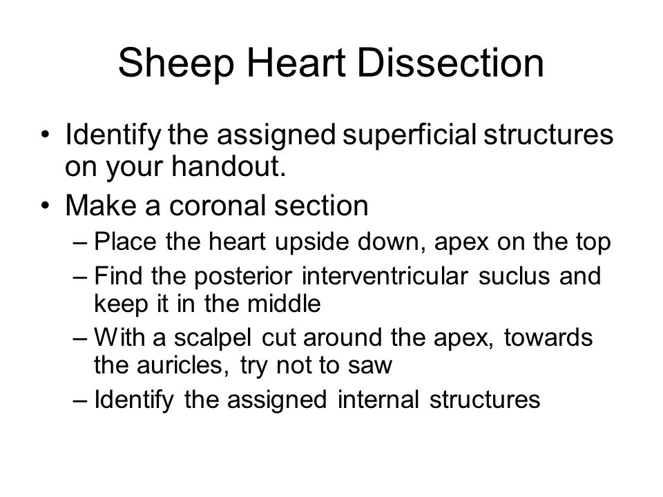 Gemütlich Sheep Heart Dissection Lab Anatomy And Physiology Answers ...