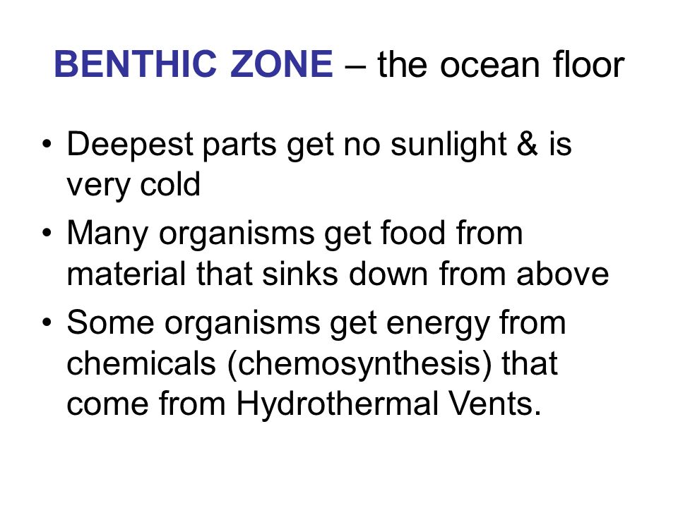 BENTHIC ZONE – the ocean floor Deepest parts get no sunlight & is very cold Many organisms get food from material that sinks down from above Some organisms get energy from chemicals (chemosynthesis) that come from Hydrothermal Vents.