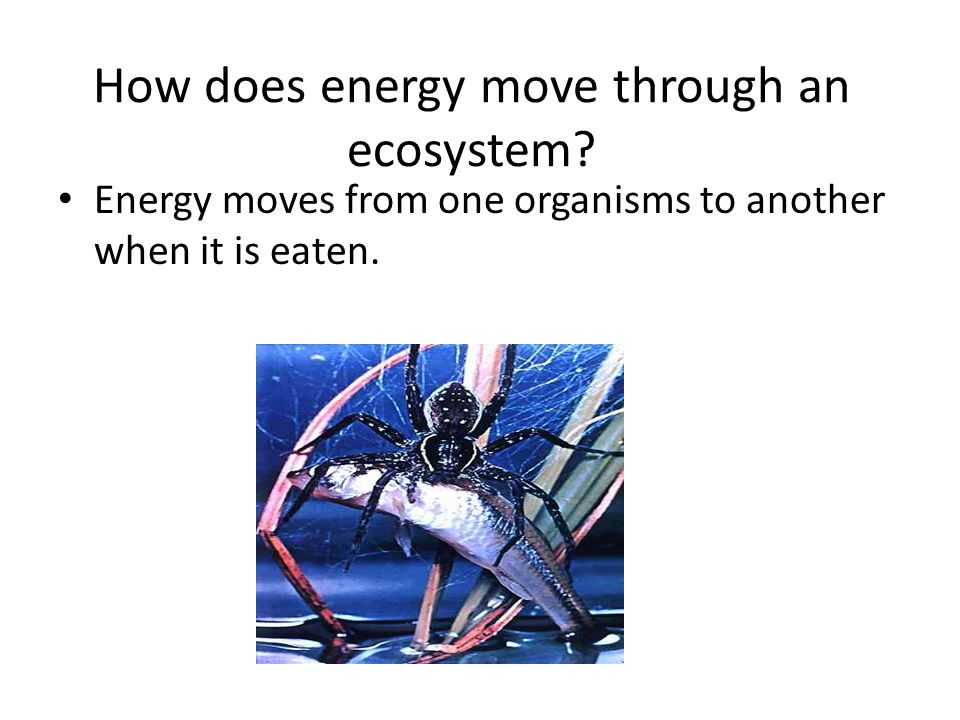 How does energy move through an ecosystem.