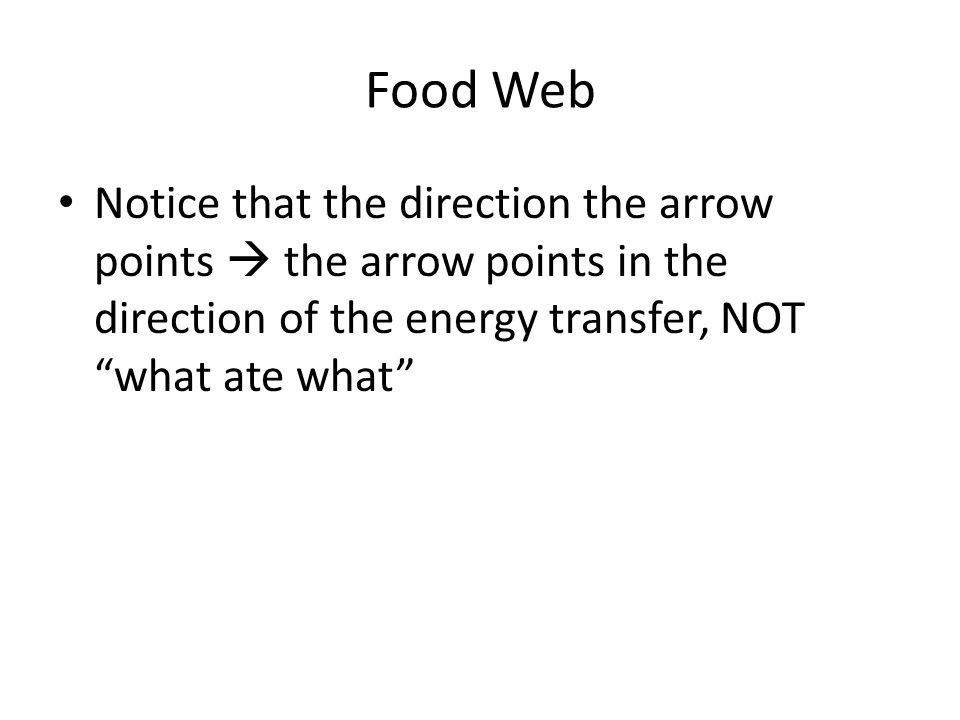 Food Web Notice that the direction the arrow points  the arrow points in the direction of the energy transfer, NOT what ate what
