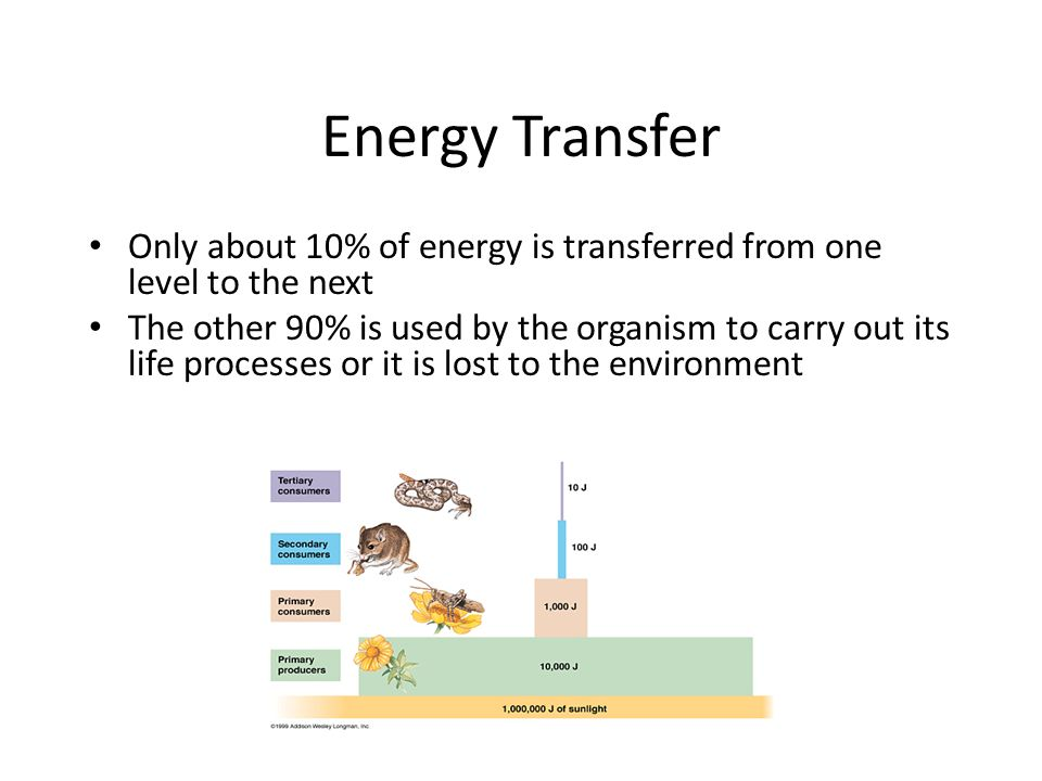 Energy Transfer Only about 10% of energy is transferred from one level to the next The other 90% is used by the organism to carry out its life processes or it is lost to the environment