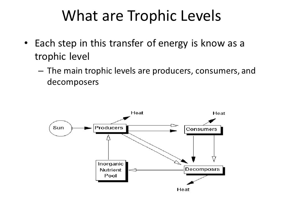 What are Trophic Levels Each step in this transfer of energy is know as a trophic level – The main trophic levels are producers, consumers, and decomposers