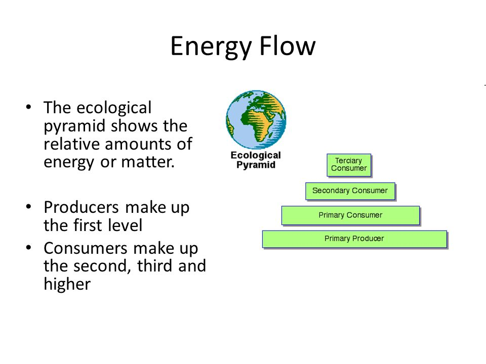 Energy Flow The ecological pyramid shows the relative amounts of energy or matter.