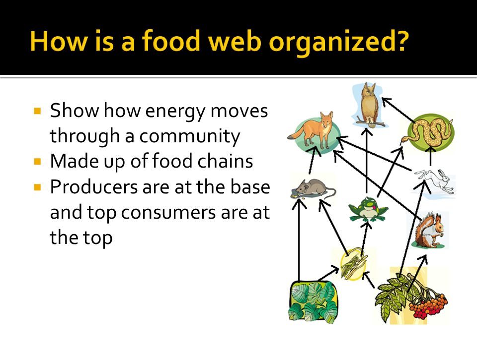  Show how energy moves through a community  Made up of food chains  Producers are at the base and top consumers are at the top