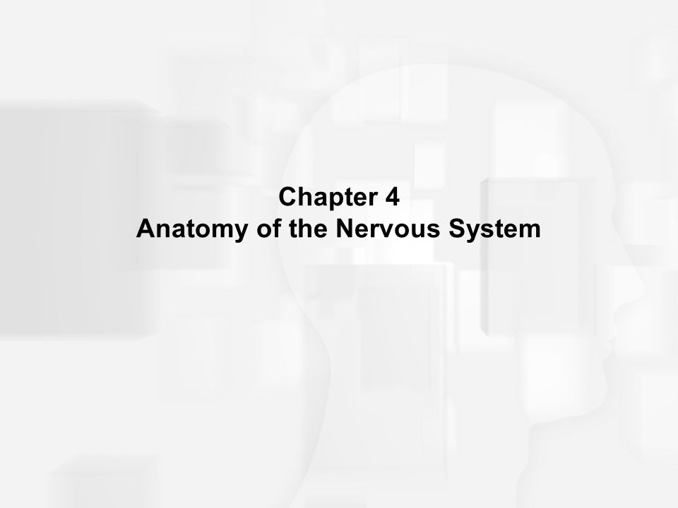 Chapter 4 Anatomy of the Nervous System. Structure of the Vertebrate ...