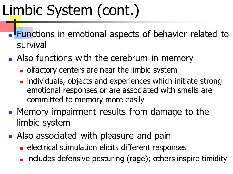 Limbic System (cont.) Functions in emotional aspects of behavior related to survival Also functions with the cerebrum in memory olfactory centers are near the limbic system individuals, objects and experiences which initiate strong emotional responses or are associated with smells are committed to memory more easily Memory impairment results from damage to the limbic system Also associated with pleasure and pain electrical stimulation elicits different responses includes defensive posturing (rage); others inspire timidity