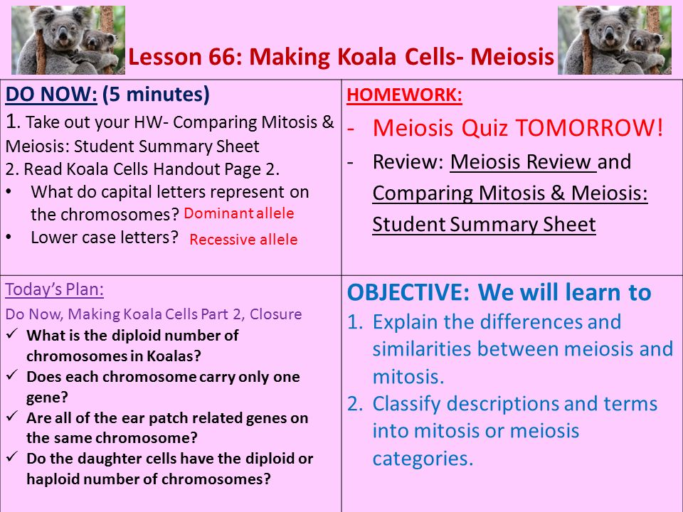 write a comprehensive essay on mitosis and meiosis