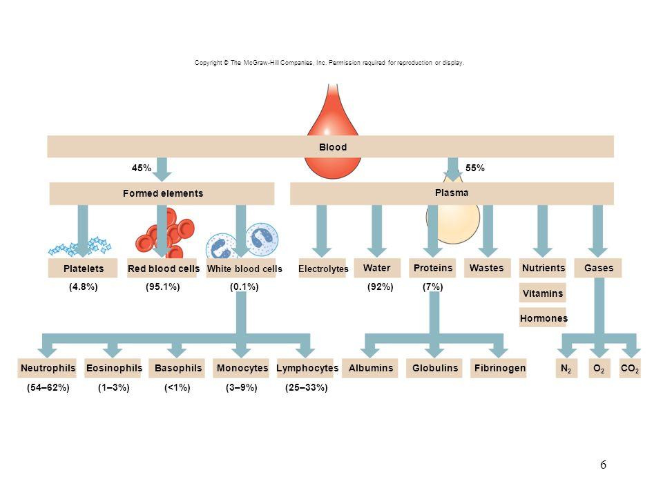 6 Blood (4.8%)(95.1%)(0.1%) Plasma Hormones MonocytesBasophilsEosinophilsNeutrophils (54–62%)(1–3%)(<1%)(3–9%)(25–33%) GlobulinsAlbumins (92%)(7%) N2N2 O2O2 CO 2 PlateletsRed blood cells ProteinsNutrientsGases 45%55% WastesWater White blood cellsElectrolytes Vitamins LymphocytesFibrinogen Formed elements Copyright © The McGraw-Hill Companies, Inc.