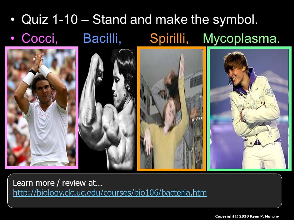 Quiz 1-10 – Stand and make the symbol. Cocci, Bacilli, Spirilli, Mycoplasma.