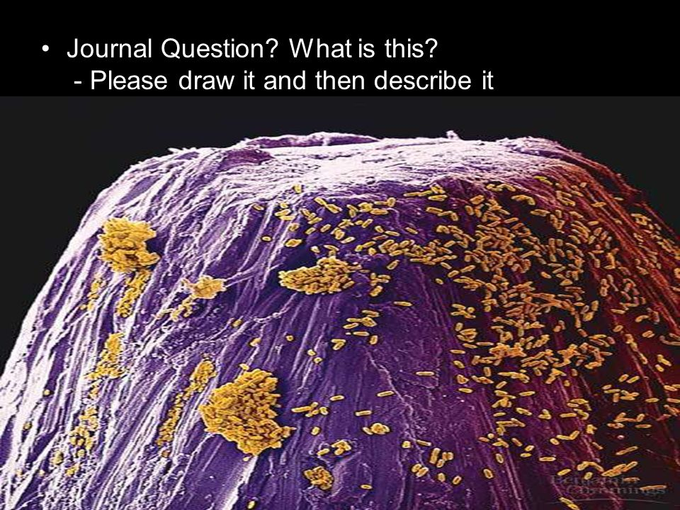 Journal Question What is this - Please draw it and then describe it