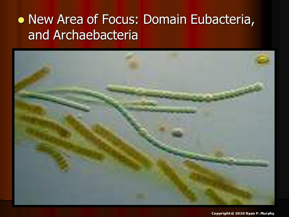 New Area of Focus: Domain Eubacteria, and Archaebacteria New Area of Focus: Domain Eubacteria, and Archaebacteria Copyright © 2010 Ryan P.