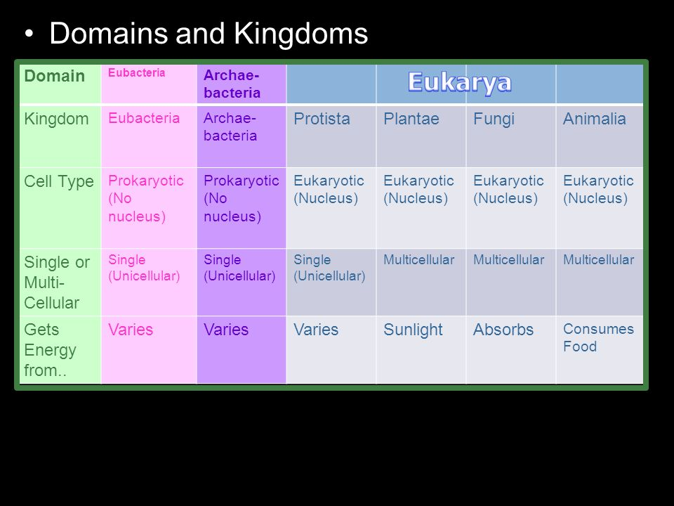 Domains and Kingdoms Domain Eubacteria Archae- bacteria Kingdom EubacteriaArchae- bacteria ProtistaPlantaeFungiAnimalia Cell Type Prokaryotic (No nucleus) Eukaryotic (Nucleus) Single or Multi- Cellular Single (Unicellular) Single (Unicellular) Single (Unicellular) Multicellular Gets Energy from..
