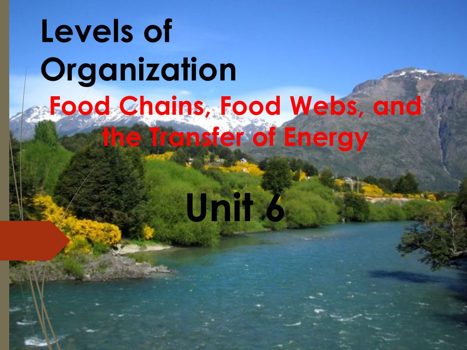 Levels of Organization Food Chains, Food Webs, and the Transfer of Energy Unit 6