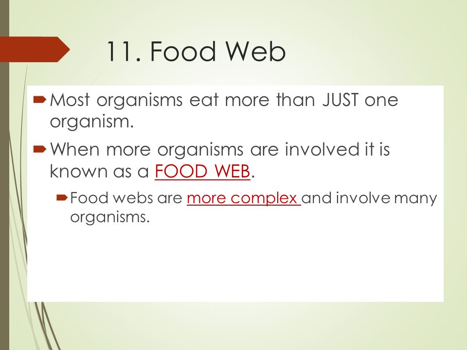 11. Food Web  Most organisms eat more than JUST one organism.