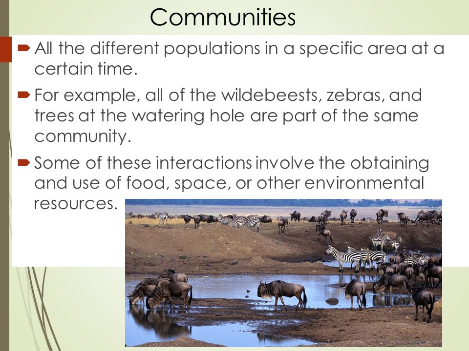 Communities  All the different populations in a specific area at a certain time.