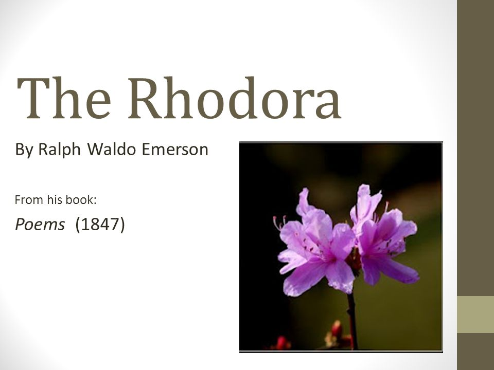 the rhodora explanation What does name rhodora mean you are a law unto itself your tendency is to finish whatever you start you are tolerant and like to help humanity you are very active.