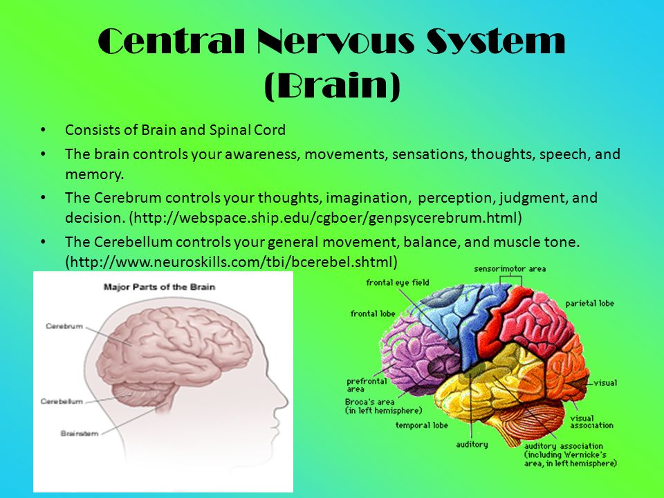 the mysteries of the nervous system and the brain Advancement of knowledge of factors that prevent and enhance brain reorganization unraveling the mysteries of the the changing nervous system.