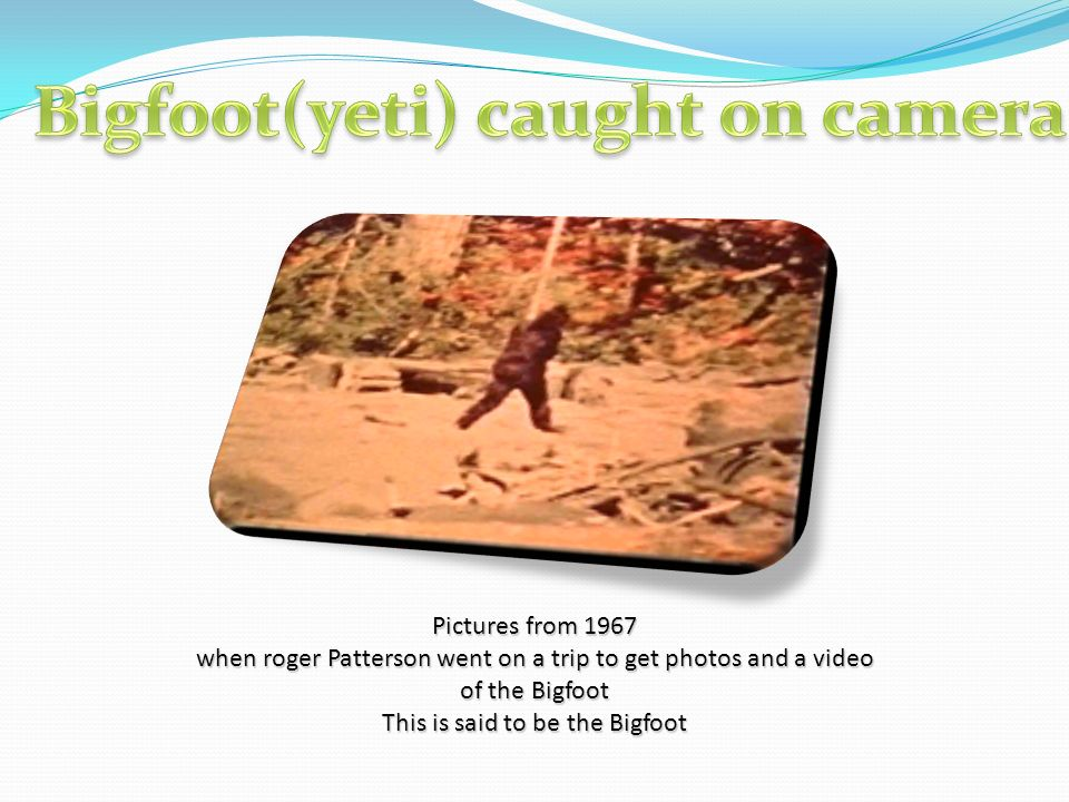 Pictures from 1967 when roger Patterson went on a trip to get photos and a video of the Bigfoot This is said to be the Bigfoot
