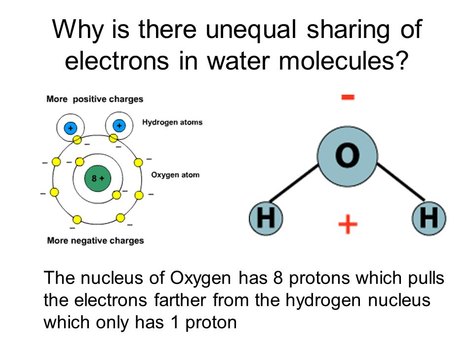 Water Molecule Worksheet Worksheets for all | Download and Share ...