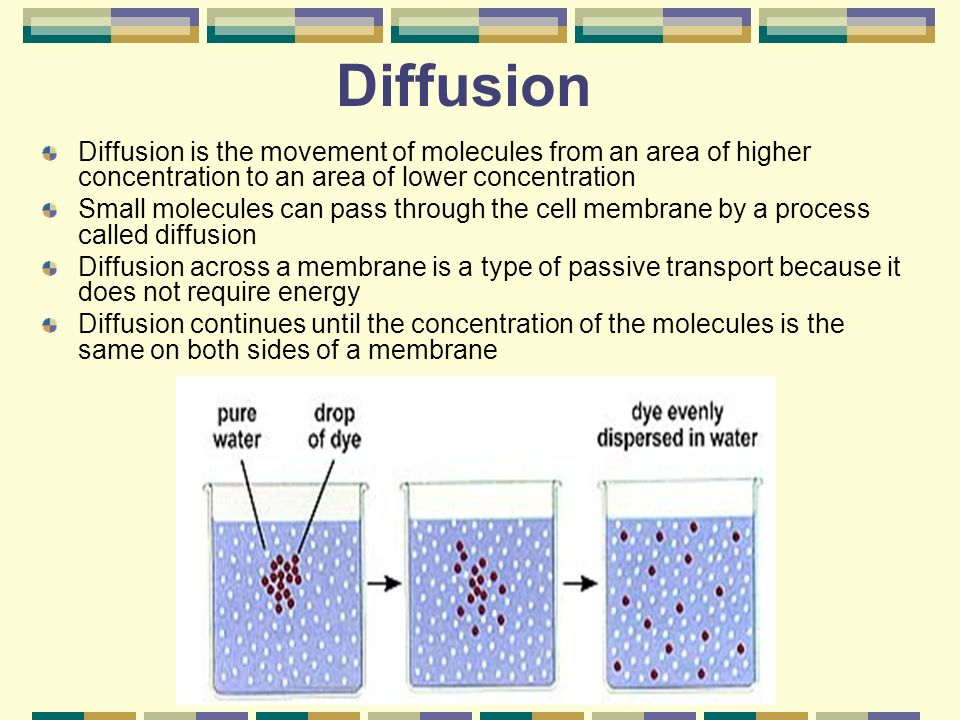 Diffusion Diffusion is the movement of molecules from an area of higher concentration to an area of lower concentration Small molecules can pass through the cell membrane by a process called diffusion Diffusion across a membrane is a type of passive transport because it does not require energy Diffusion continues until the concentration of the molecules is the same on both sides of a membrane
