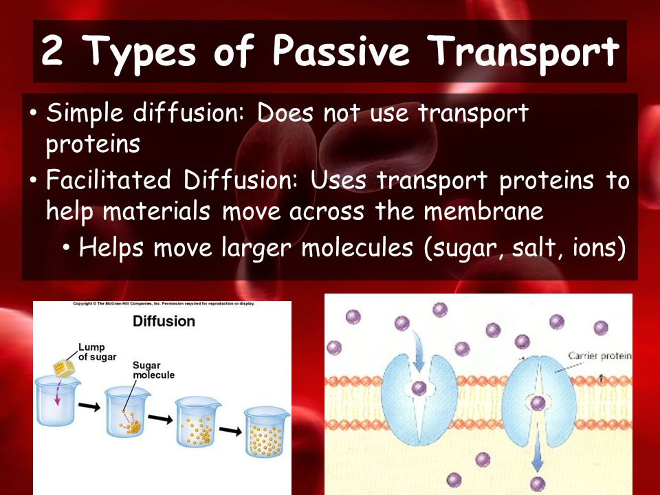 Simple diffusion: Does not use transport proteins Facilitated Diffusion: Uses transport proteins to help materials move across the membrane Helps move larger molecules (sugar, salt, ions) 2 Types of Passive Transport