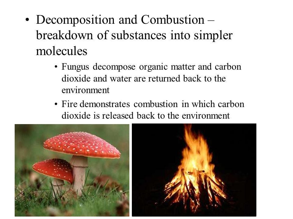 Decomposition and Combustion – breakdown of substances into simpler molecules Fungus decompose organic matter and carbon dioxide and water are returned back to the environment Fire demonstrates combustion in which carbon dioxide is released back to the environment