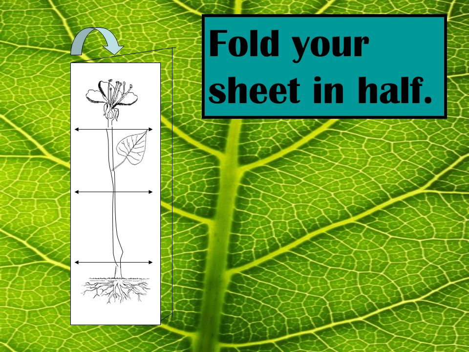 Fold your sheet in half.