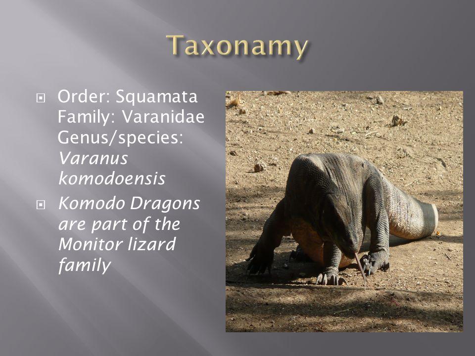  Order: Squamata Family: Varanidae Genus/species: Varanus komodoensis  Komodo Dragons are part of the Monitor lizard family