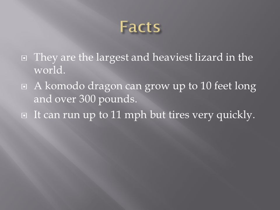  They are the largest and heaviest lizard in the world.