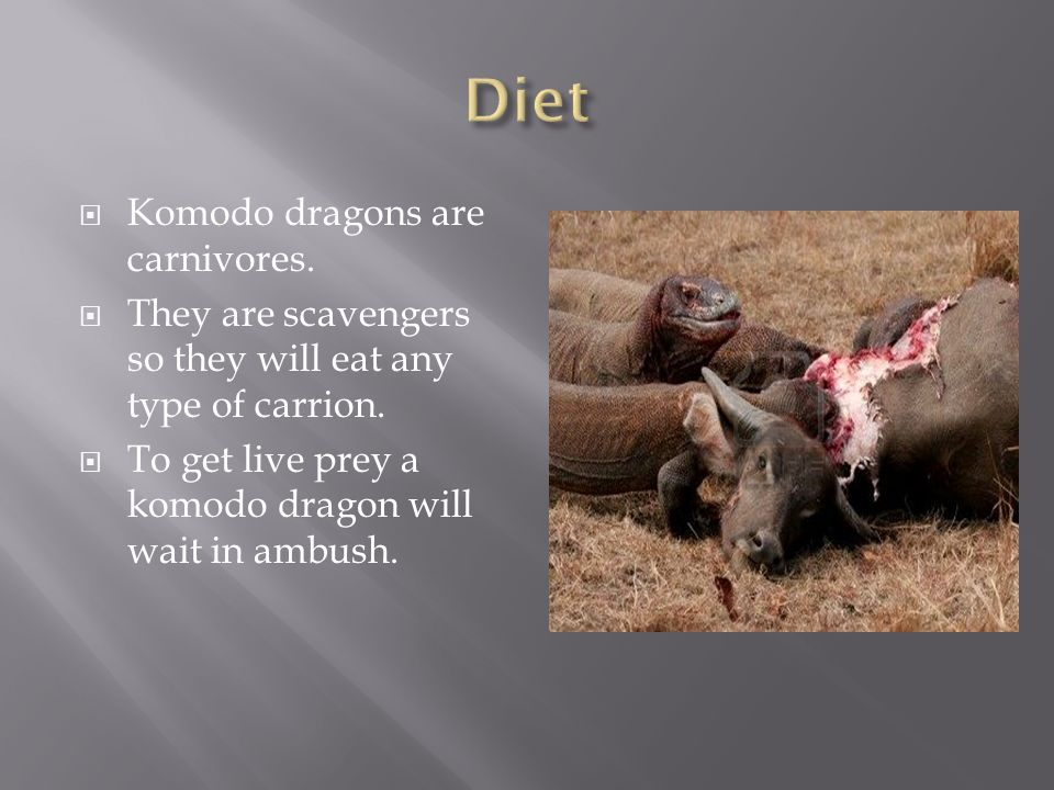  Komodo dragons are carnivores.  They are scavengers so they will eat any type of carrion.
