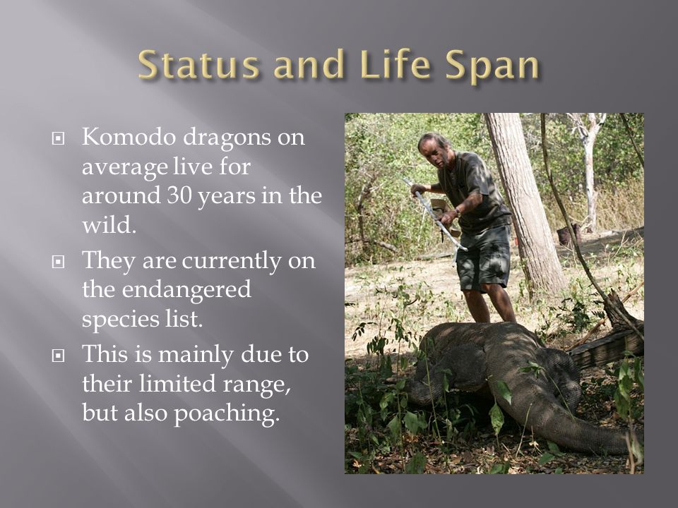  Komodo dragons on average live for around 30 years in the wild.