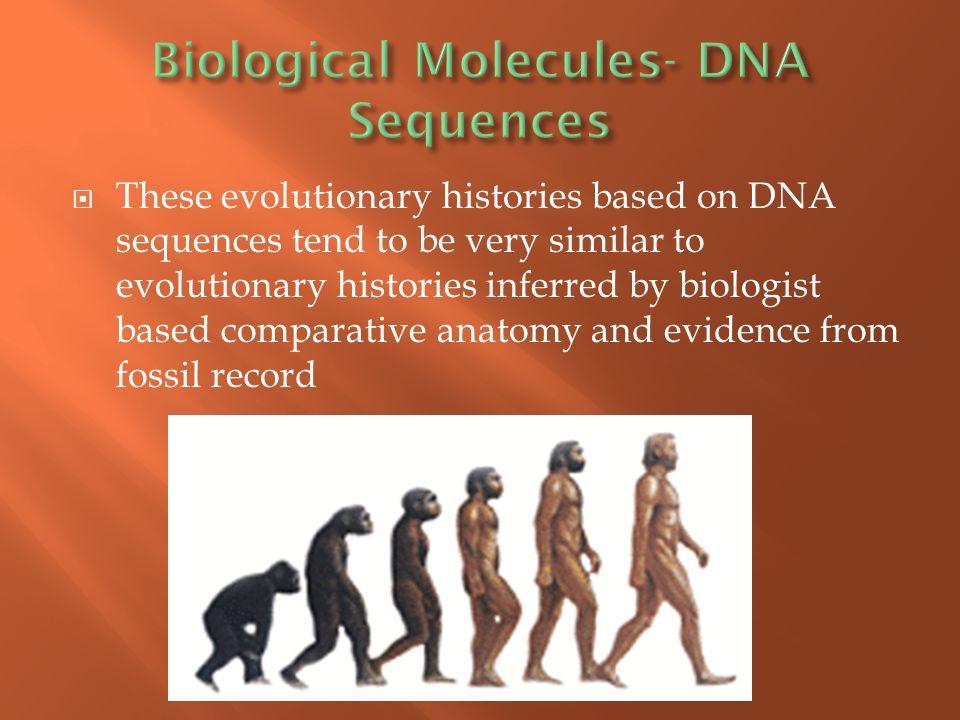 Evidence Of Evolution Grade 10 Biology Spring Ppt Download