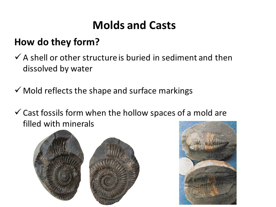 Petrified Fossils  Molds and Casts  Carbon Films  Preserved ...