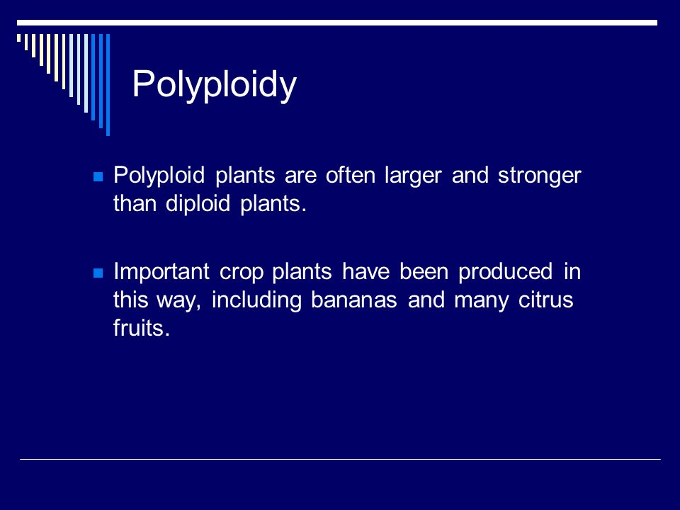 Polyploidy Polyploid plants are often larger and stronger than diploid plants.