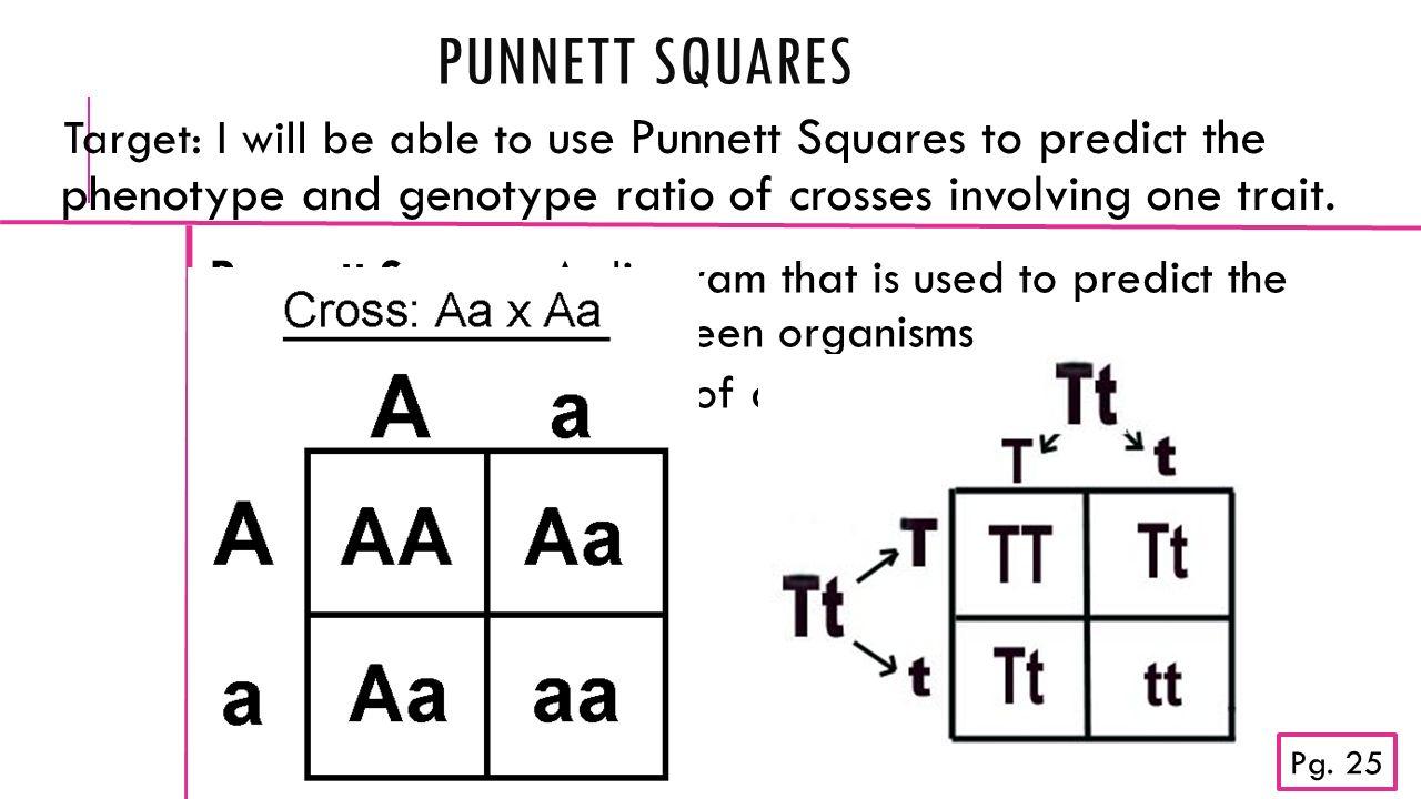 punnett squares missing you on cloud nine trail mix ppt download rh slideplayer com punnett square diagram cystic fibrosis Fill in Punnett Square